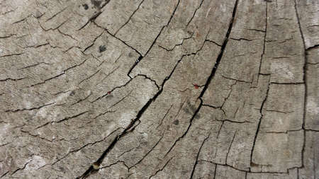 scarred: Old scarred light brown wood cut background texture Stock Photo