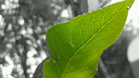 standout: Green vibrant leaf in summer standout macro photo