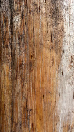 surface: Pine tree log surface background texture