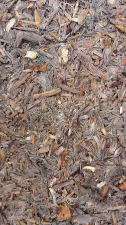 ferraille: Saw d�chets sur le sol de la for�t macro fond