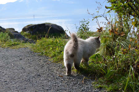 beautiful cat exploring the vegetation on the side of a dirt road next to the sea shore Stock Photo