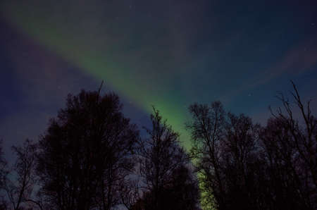 ionosphere: beautiful aurora borealis dancing over tree tops in autumn
