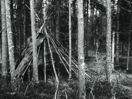 tipi: Old weathered tipi lavo structure in mighty pine tree forest