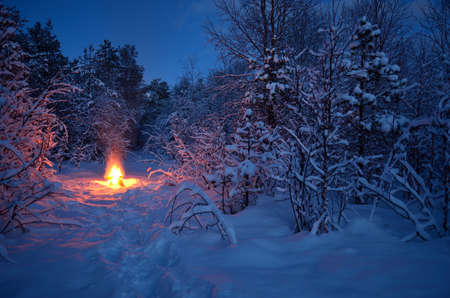 hot warming campfire in snowy winter forest Stok Fotoğraf