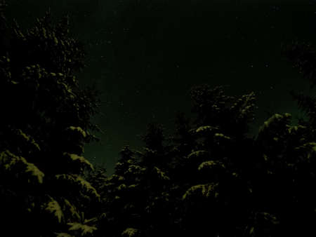 northern light: green glow from northern light on snowy spruce tree forest with star sky background Stock Photo