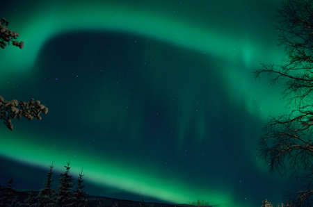 strong majestic aurora borealis, northern light on sky with trees