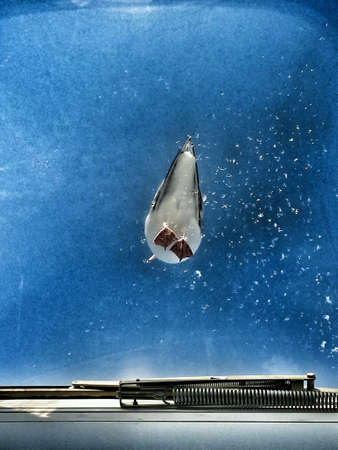 Seagull standing on glass skylight with blue sky underneath angle shot