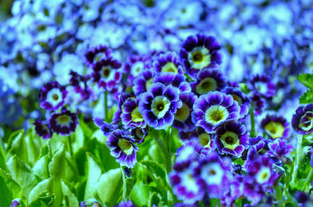 Dreamy bright blue flowers in sunshine background