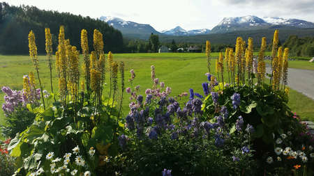 Majestic colorful flowers in summer garden with green pasture and snowy mountain background Zdjęcie Seryjne