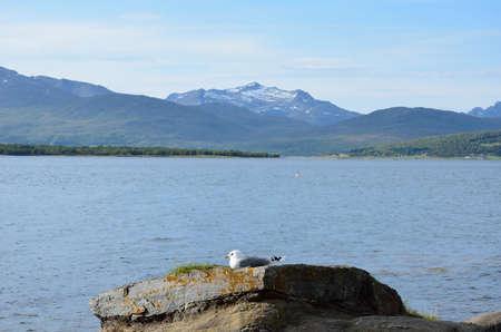 beautiful seagull resting on seashore boulder in warming sunshine Zdjęcie Seryjne