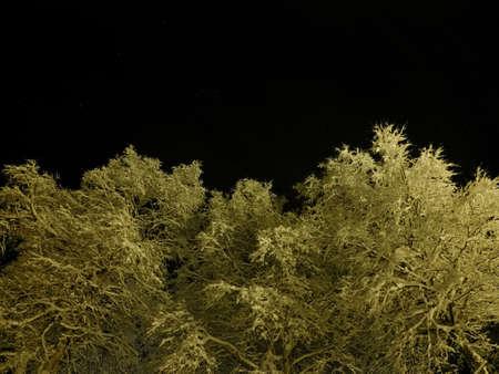 pristine white snow covered trees with dark star night sky background