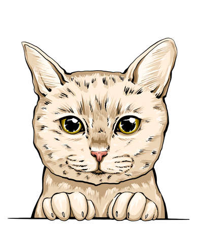 colorful portrait of a cat muzzle. cat portrait beautiful eyes minimalistic graphic illustration. hand-drawn vector portrait of a cat. feline fluffy portrait of a thoroughbred pet. American cat