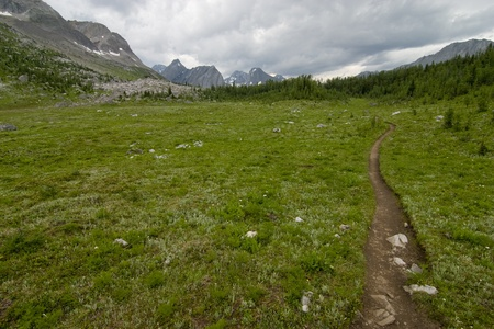 meadowland: Hiking trail over an alpine pass in Alberta Canada