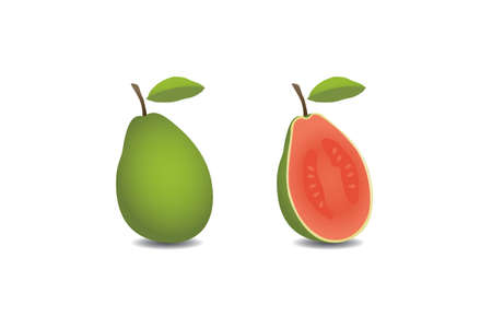 guava fruit: vector guava fruit
