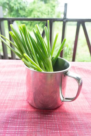 scallions: a cup of green onions sometimes called shallots or scallions