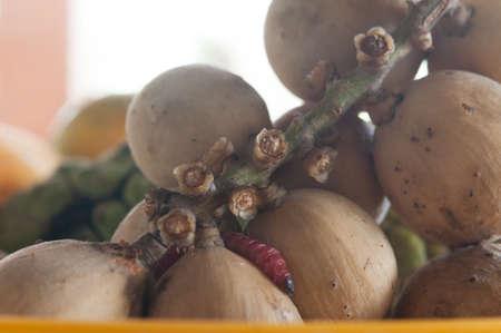 gusanos: gusanos toman el almuerzo come la pudrici�n de la fruta Foto de archivo