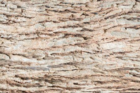 furrow: tree skin