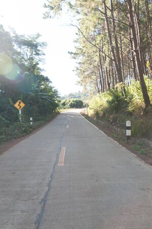 north woods: Road through forest lined with stately red pine trees