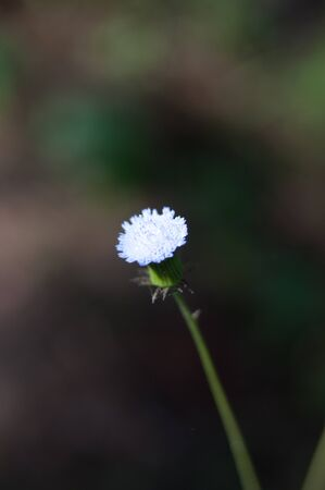 struggles: Flowers in the garden. Blurred background. Stock Photo