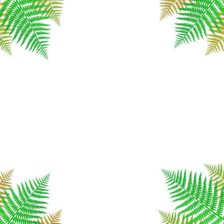 Green fern frame isolated on white background vector design  イラスト・ベクター素材