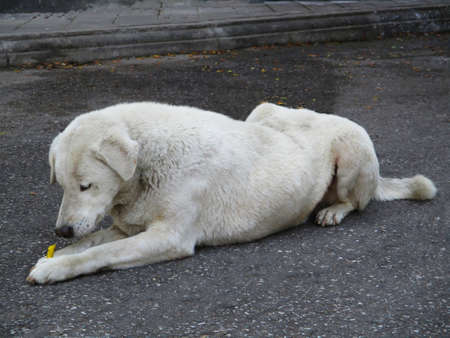 A Dog Lying On The Floor And Holding A Snack Stock Photo