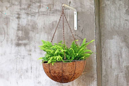 Beautiful Potted Plant Hanging on the Wall