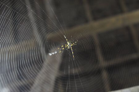 Spider with the web Stock Photo