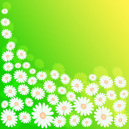hayfield: green spring meadow background with flowers