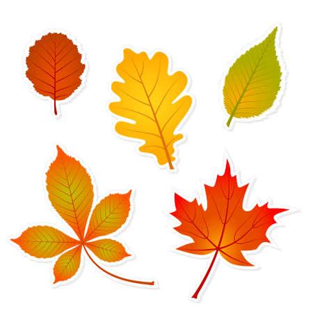 alder: autumn set of leaves stickers with shadows - oak, maple, beech, horse chestnut, alder Illustration