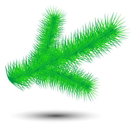 conifer: vector christmas green conifer twig isolated on white background