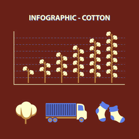infographic with graph of growth production cotton with icons truck and socks in flat design Vector