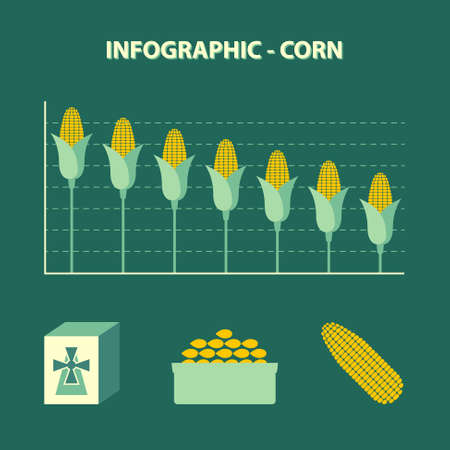 vector colored infographic declining production of corn - info graph in flat design with icon of flour, bowl with grains and yellow maize ear on green background