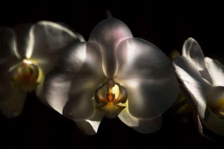 postproduction: The  Orchid is Blooming now Post-production. Stock Photo
