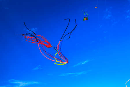 watching the kites in the sky.