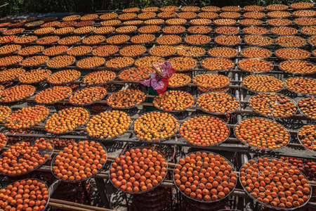 This is Harvest of persimmon.