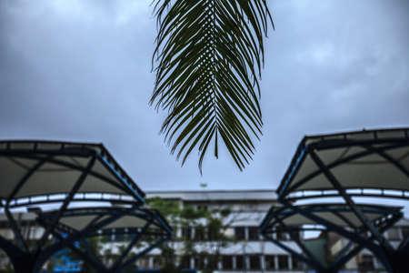 Palm leaf and many shed.