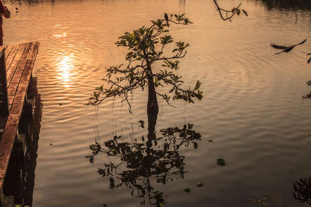 shrubs: Lonely shrubs on red lake. Stock Photo