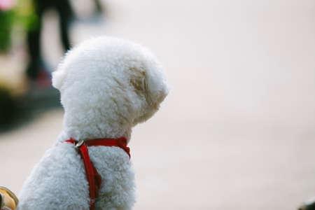 lonely dog is waiting its master. 版權商用圖片