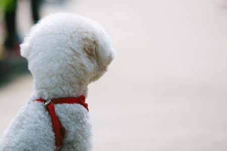 lonely dog is waiting its master. Stock Photo