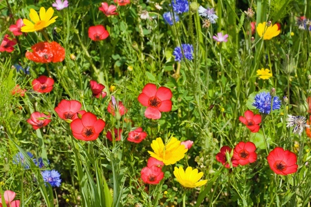 Summer meadow with lots of different blooming wild summer flowers photo