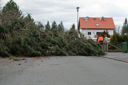 overturned overturn: Storm damage. A tree that has fallen on a street after a storm Stock Photo