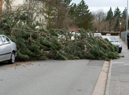 overturn: Danni provocati dal maltempo. Un albero che � caduto su una strada dopo una tempesta Archivio Fotografico