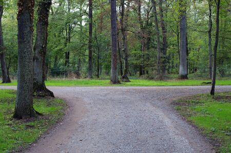 Rechts oder links eine Gabel in der Straße in einem Wald Standard-Bild