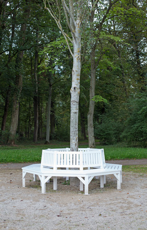 publicly: White benches grouped around a tree