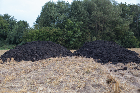 A dung heap on a mown grain field
