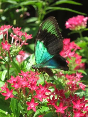 Butterfly park Stock Photo