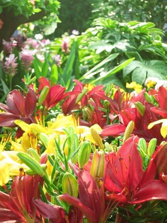 Flowers Garden In the Morning