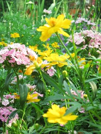 Flowers Garden Stock Photo