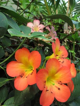 Orange Orchids Flower