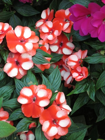 Bunch of Red White Flowers